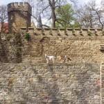 Schlossgelände am Inneren Graben