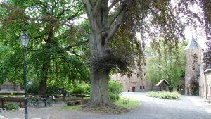 Schloss Mansfeld | Blutbuche